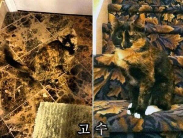 고양이 은신레벨